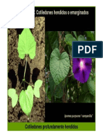 Plantulas II