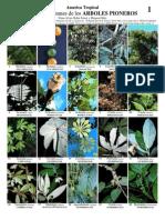 Plantas Tropicales 1