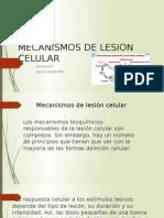 Mecanismos de Lesion Celular