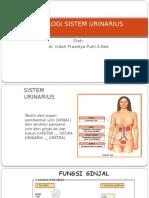 Fisiologi Sistem Urinarius