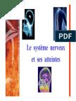 SAP 1 Systeme Nerveux
