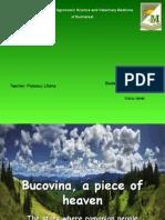 Bucovina, A Piece of Heaven