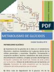 Clase de Bioquímica - Metabolismo de Glúcidos 2014