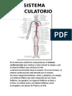 circulatorio.docx