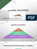 Malaria (Paludismo)