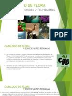 Catalogo de Flora