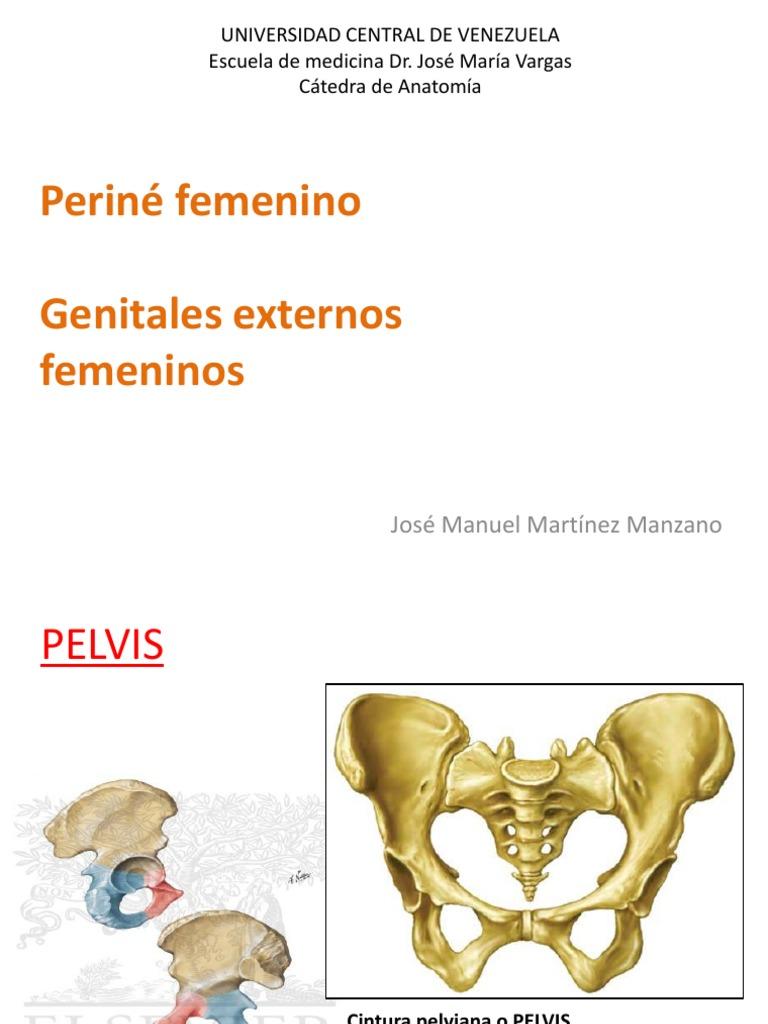 Clase Perine Femenino y Genitales Externos