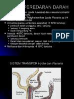 Biologi Sistem Peredaran Darah22