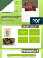 Exposicion de Cannabis Sativa Toxicologia
