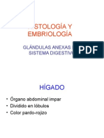 Glandula Anexas (Higado- Pancreas)