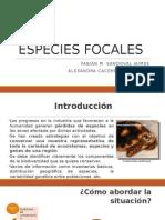 1 Especies Focales
