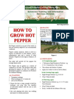 How to Grow Hot Pepper