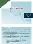 4. Ciclo Celular