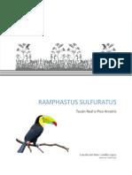 Rhampastus sulfuratus