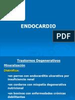 Patologías del endocardio en medicina veterinaria
