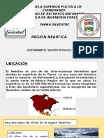 Region Neartica