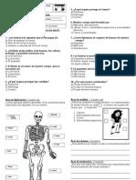 Evaluacion Cuerpo Humano 1 ° basico esqueleto 2013