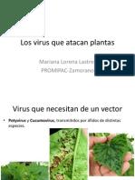 Los Virus Que Atacan Plantas