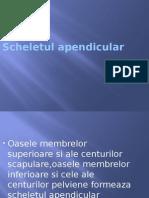scheletul_apendicular.pptx