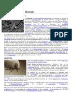 Bacteria y acaros.docx
