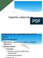 Digestion y Absorcion dde carbohidratos