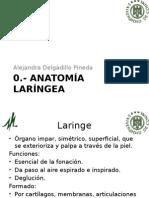 Anatomia Laringea
