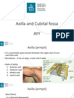 Axilla and Cubital Fossa (AYY)