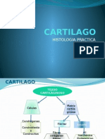 cartilago-130521020714-phpapp02.pptx