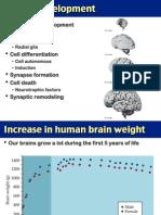 14.+Neural+Development+_+Hormonal+Regulation+of+Sexual+Differentiation (1)