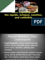 Phylum Mollusca_Class Cephalopoda