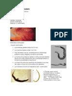 Teoria Enterobiosis u Oxiuriosis