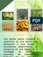 PLANTAS NATIVAS (1)