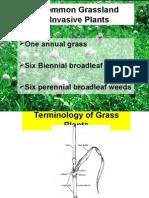 grassland invasive nrcs 07