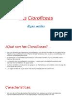 Las Clorofíceas.pptx