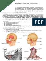 Physiology of Mastigation