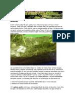 Tipos de Algas y Su Control