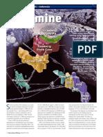 IMJan2010a.pdf