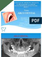 Arco Dentario