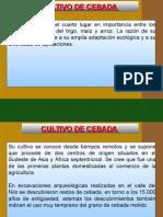 CULTIVO DE CEBADA.ppt