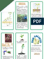 269404666-Germinacion-de-Las-Plantas-Joaquin-Salinas-5º-d.doc