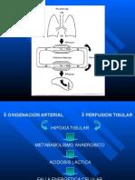 V02-Do2 Perfusion Tisular