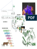 Taksonomi Hewan Dan Bakteri