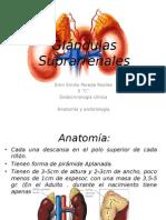 Glándulas Suprarrenales ANATO.pptx