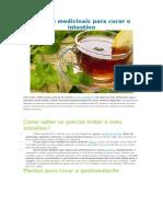 Plantas Medicinais Para Curar o Intestino, Acne, Calcio, Artérias