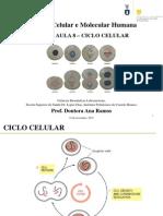ÍNDICE AULA 8_ Ciclo Celular
