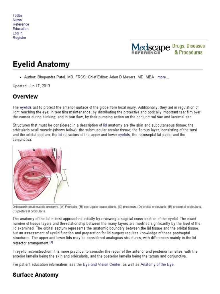 Eyelid Anatomy   Common Carotid Artery   Anatomical Terms Of Location