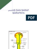 Medula Spinalis Dan Saraf Perifer Kuliah