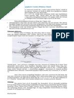 Hypophysis Cerebri, Kelenjar Thyroid, Parathyroid Gland, Glandula Supraren (Adrenal Gland), & Pancreas