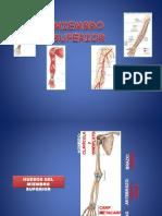 Anatomía Del Miembro Superior