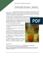 Extracción de ADN en especies vegetales.doc